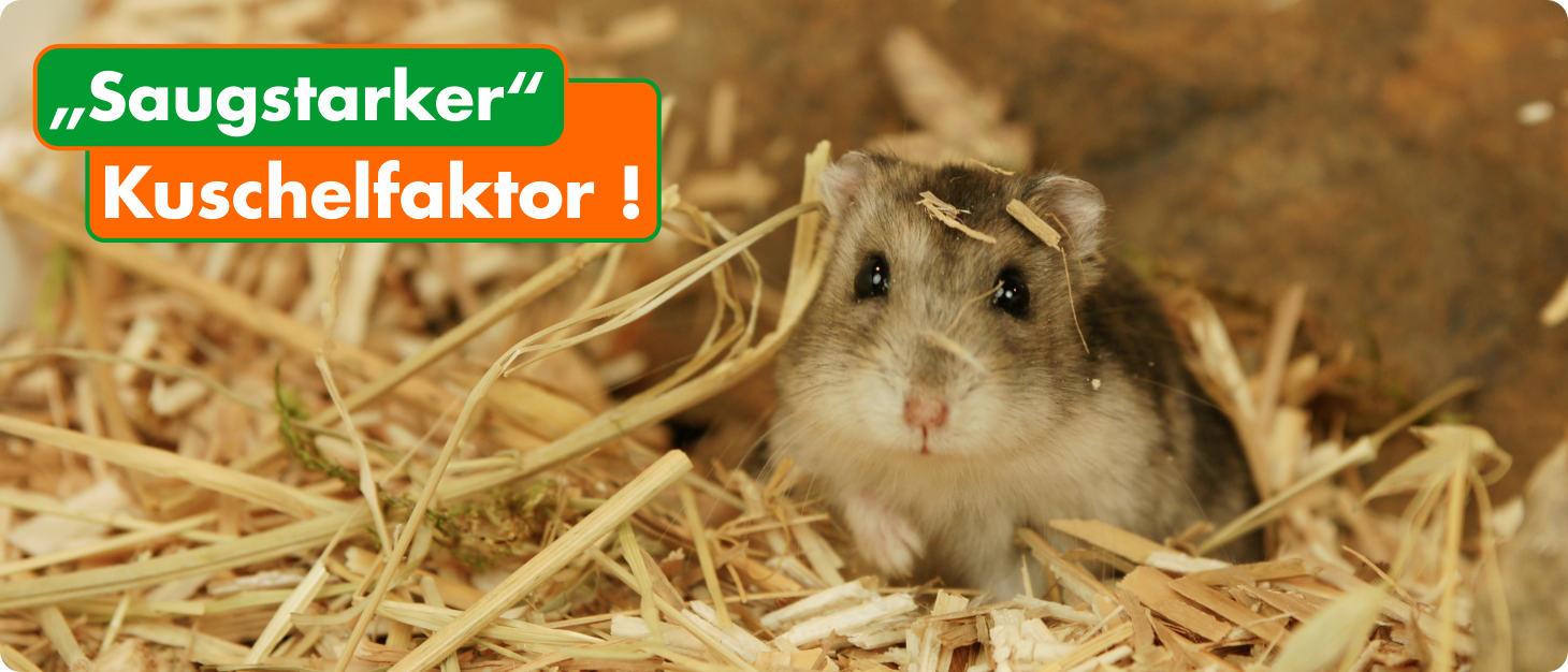 Einstreu & Sand Für Hamster & Co. Bei Rodipet®